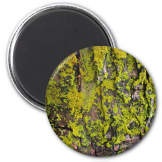 Moss Growing On A Tree 6 Cm Round Magnet