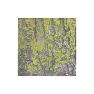 Moss Growing On A Tree Stone Magnet
