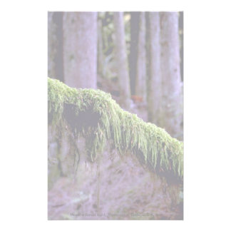 Moss in forest light, Washington State, U.S.A. fro Stationery Design