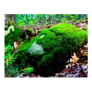 moss postcard