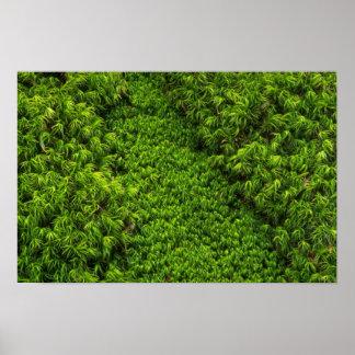 Moss Print