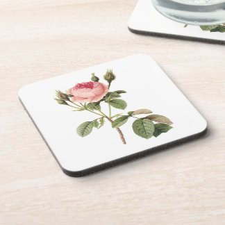moss rose (Rosa muscosa) by Redouté Coaster