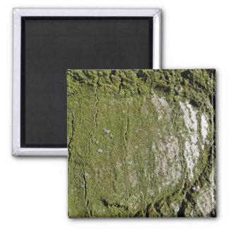 Moss Wood Texture Fridge Magnet