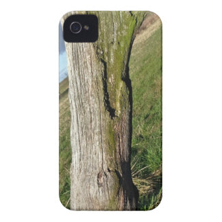 Mossy Dead Tree Trunk Case-Mate iPhone 4 Case
