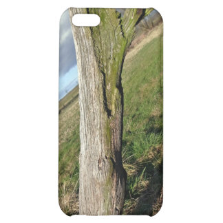 Mossy Dead Tree Trunk iPhone 5C Cover