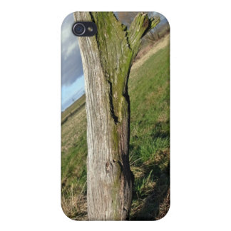 Mossy Dead Tree Trunk Case For iPhone 4