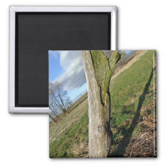 Mossy Dead Tree Trunk Square Magnet