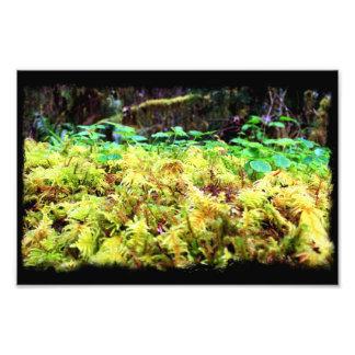 Mossy Green Heaven Photo Art