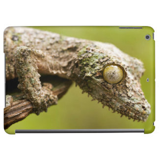Mossy leaf-tailed gecko on a piece of bark