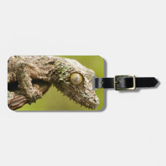 Mossy leaf-tailed gecko on a piece of bark bag tag