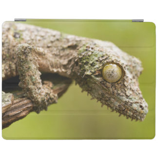 Mossy leaf-tailed gecko on a piece of bark iPad cover