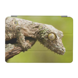 Mossy leaf-tailed gecko on a piece of bark iPad mini cover