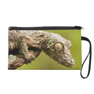 Mossy leaf-tailed gecko on a piece of bark wristlet