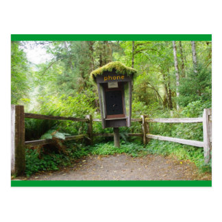 Mossy Phone Booth - Hoh Rain Forest Postcard