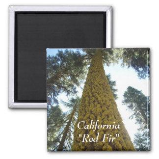 Mossy Red Fir Tree Magnet