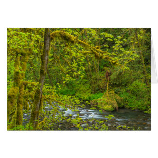 Mossy Rocks And Trees Line Eagle Creek Greeting Card