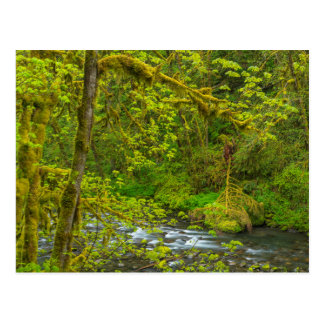Mossy Rocks And Trees Line Eagle Creek Postcard