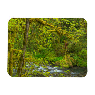 Mossy Rocks And Trees Line Eagle Creek Rectangular Photo Magnet