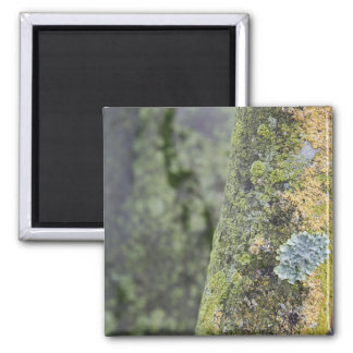 Mossy Square Magnet