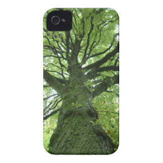 Mossy Tree iPhone 4 Cases