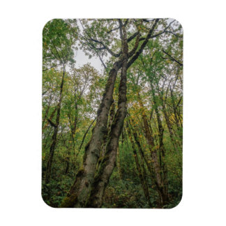 Mossy Trees in Pacific Northwest Rectangular Photo Magnet