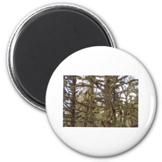 Mossy Trees Lake Quinalt Olympic National Park WA 6 Cm Round Magnet