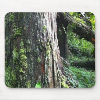 Mossy Trunk Mousepads