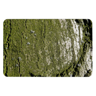 Mossy Wood Texture Rectangle Magnet