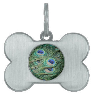 Most Beautiful Peacock Feathers Bold Blue Eyes Pet ID Tag