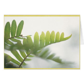 Most delicate ferns with a light yellow border card