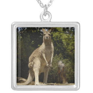 Most often seen in Australia, Eastern Grey Silver Plated Necklace