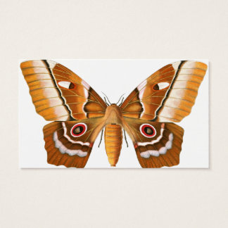 Moth Business Card - for Lepidopterist