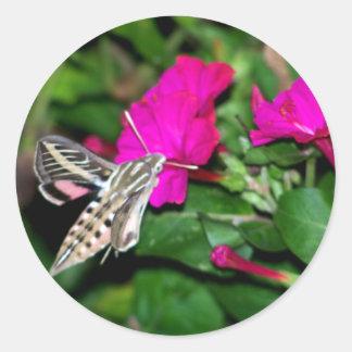 Moth Feeding on Pink Flower Round Sticker