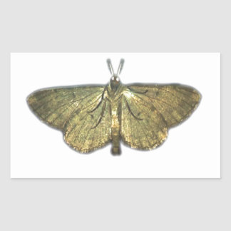 Moth gold photograph rectangular sticker