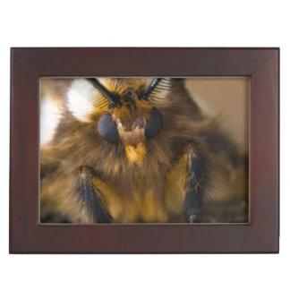 Moth Keepsake Box