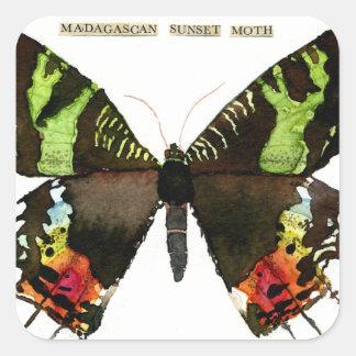 Moth: Madagascan Sunset Moth Square Sticker
