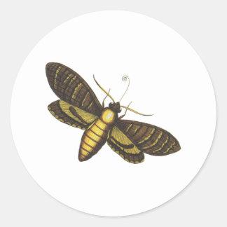 Moth moth sticker