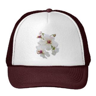 Moth Mullein Wildflower Mesh Hats
