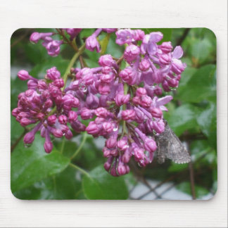 Moth on Lilac Flower Mouse Mat