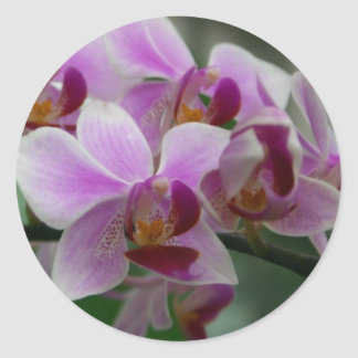 Moth Orchid Classic Round Sticker