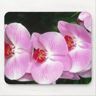 Moth Orchid Mouse Pad