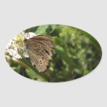 Moth Oval Stickers