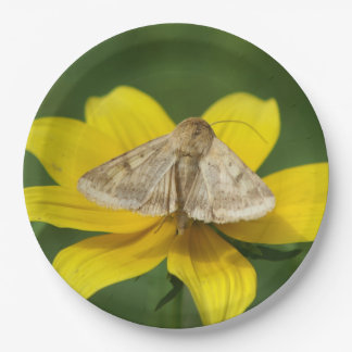 Moth, Paper Plates. 9 Inch Paper Plate