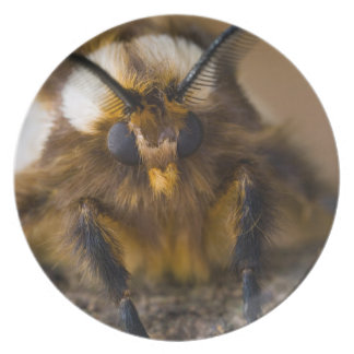 Moth Plate