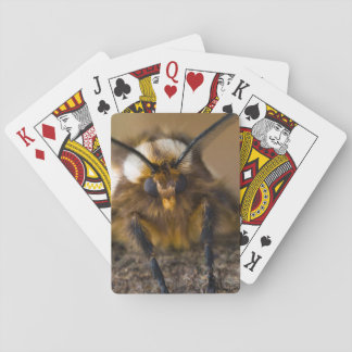 Moth Playing Cards