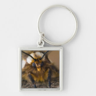 Moth Silver-Colored Square Key Ring
