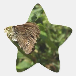 Moth Star Sticker
