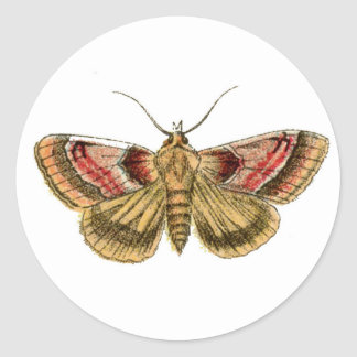 Moth Stationary Classic Round Sticker