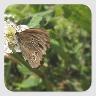 Moth Stickers