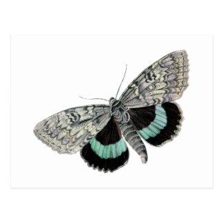 Moth vintage illustration postcard